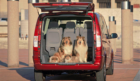 Nunca dejes a tu mascota en el maletero