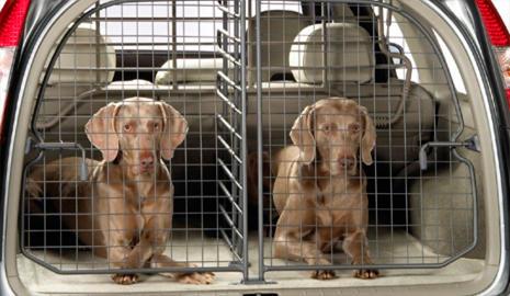 Rejilla separadora para perros