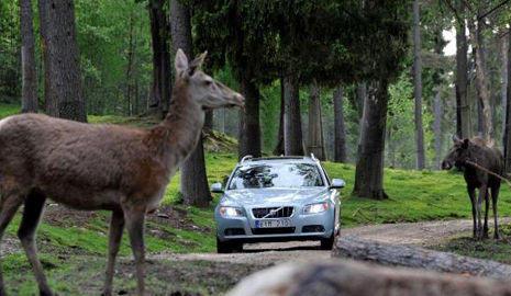 Animales silvestres en la carretera