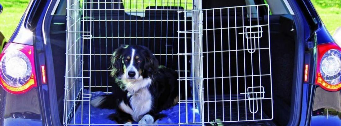 Accesorios para llevar a los perros en el coche