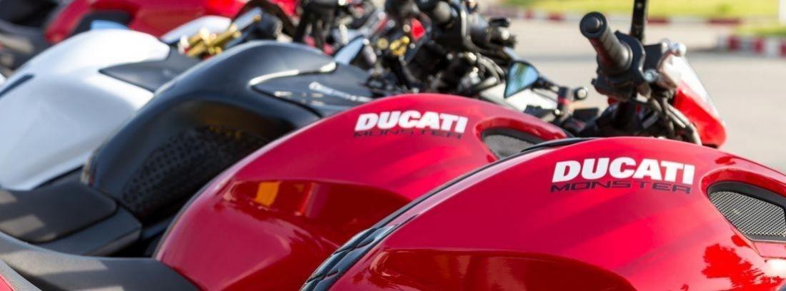 varias Ducati Monster 797 puestas en fila