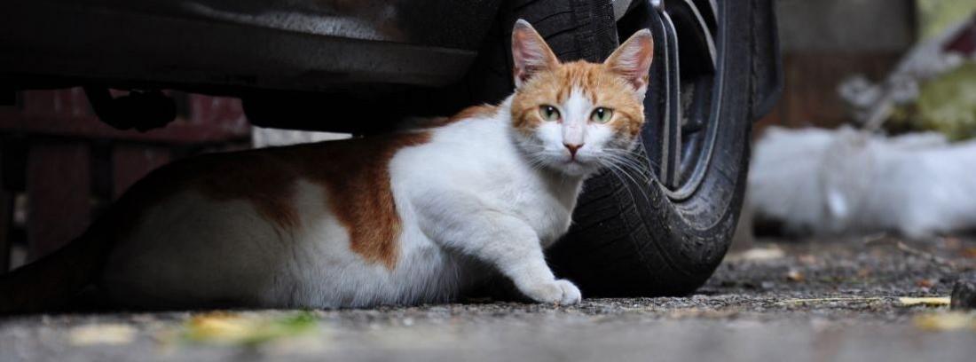 Gato tumbado debajo de coches