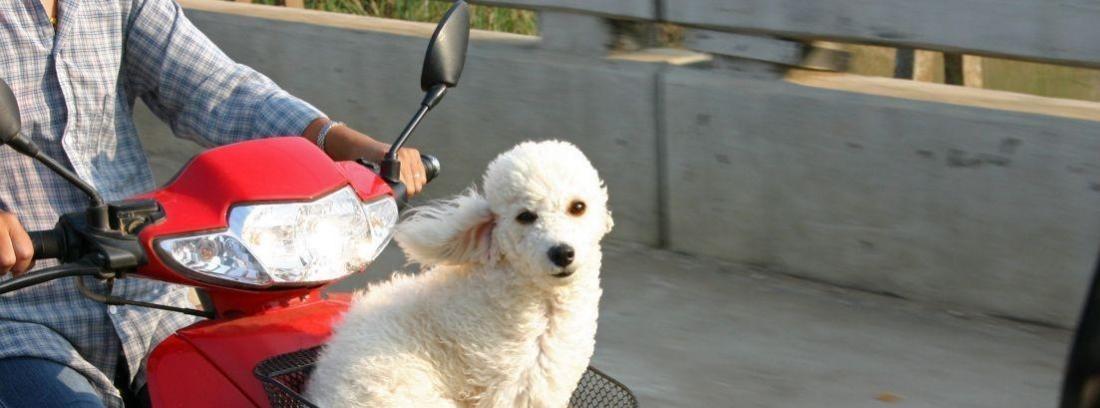 Un perro y una persona en moto a contraluz