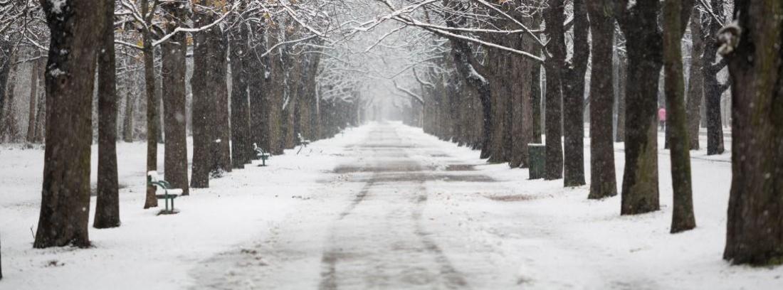 neumaticos invierno o cadenas