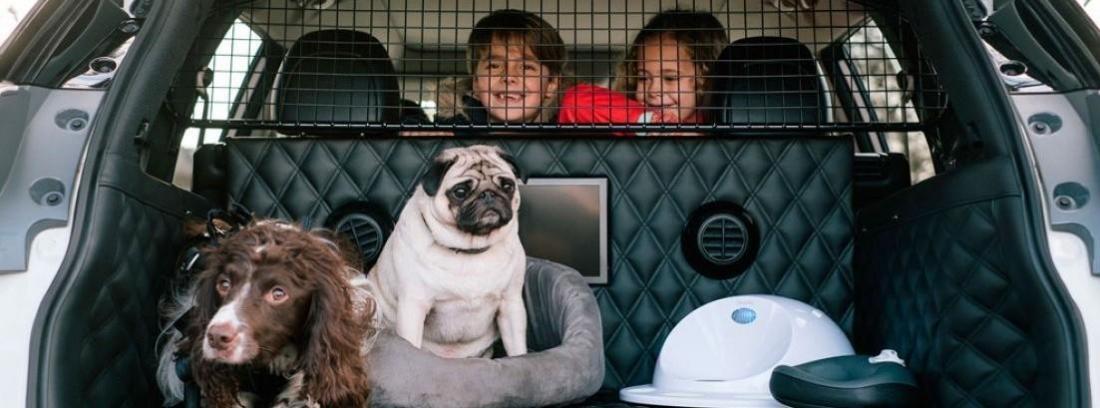 un maletero con dos perros