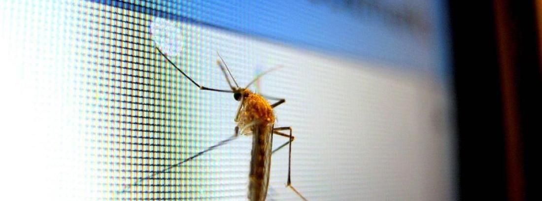 Trucos para limpiar los mosquitos del coche