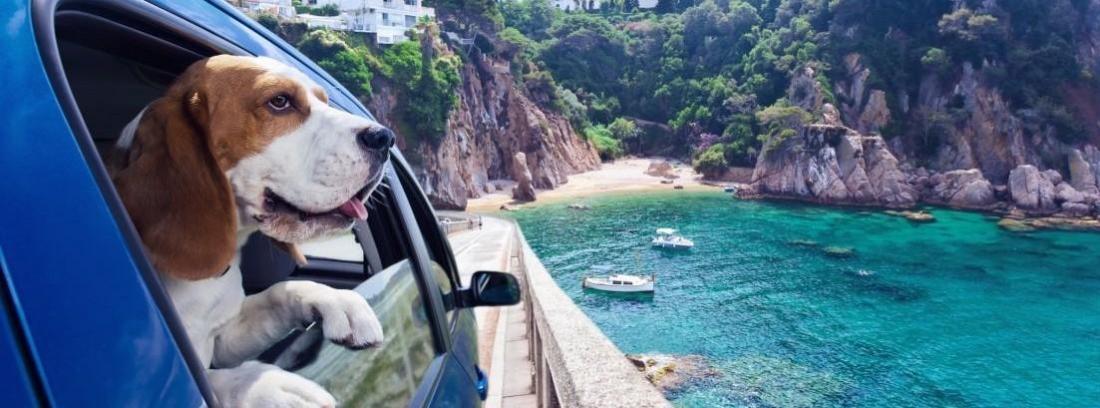 Un perro dentro de un trasportín
