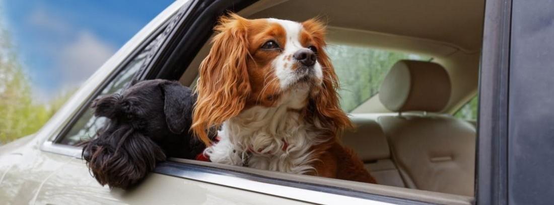 viajar con el perro en el coche de forma segura
