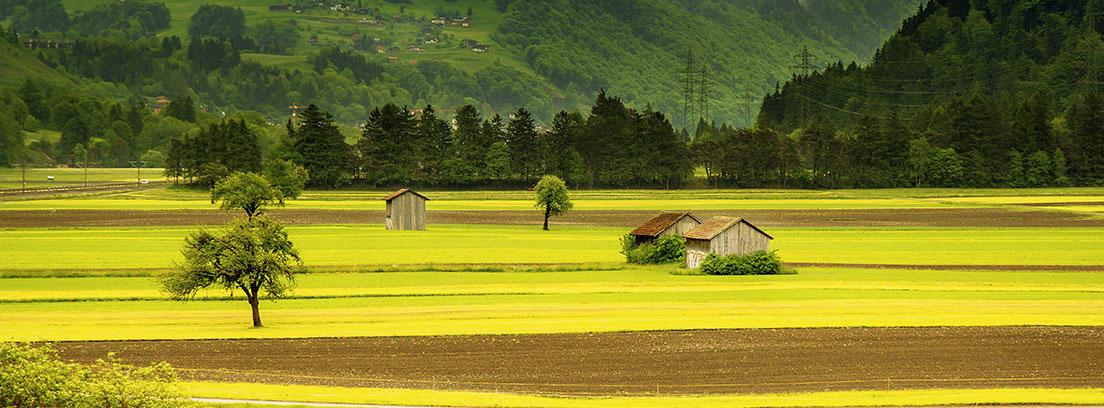 Campo verde con montañas al fondo en Suiza