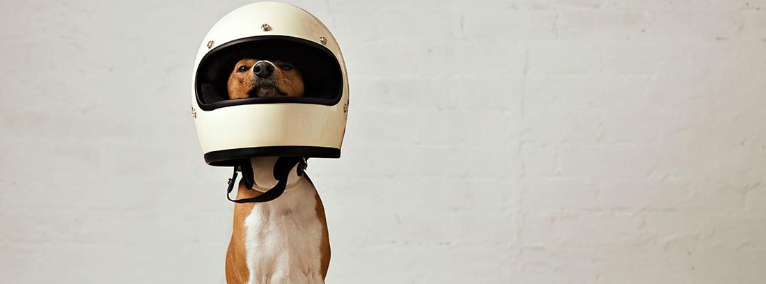 Perro sentado con un casco de moto en la cabeza