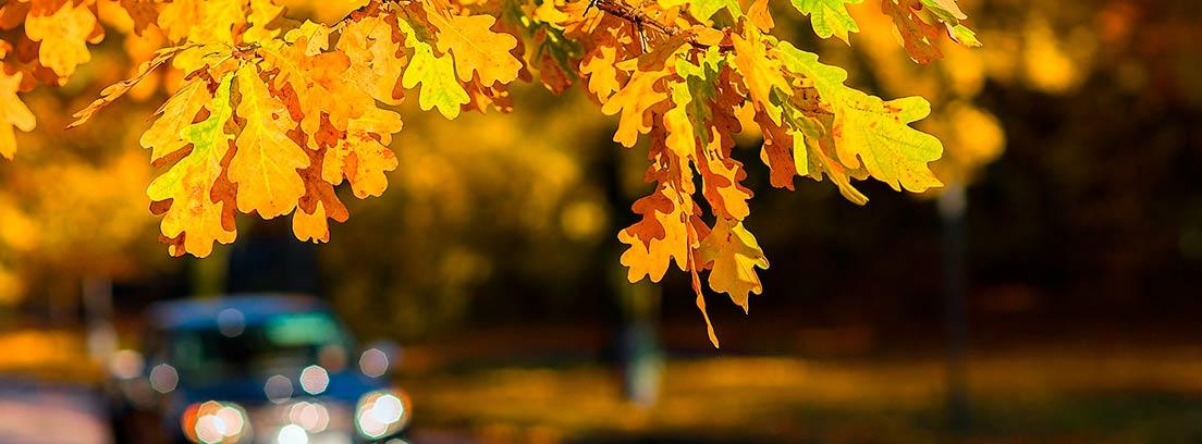 Coche desenfocado en carretera bajo árbol con hojas amarillas y marrones