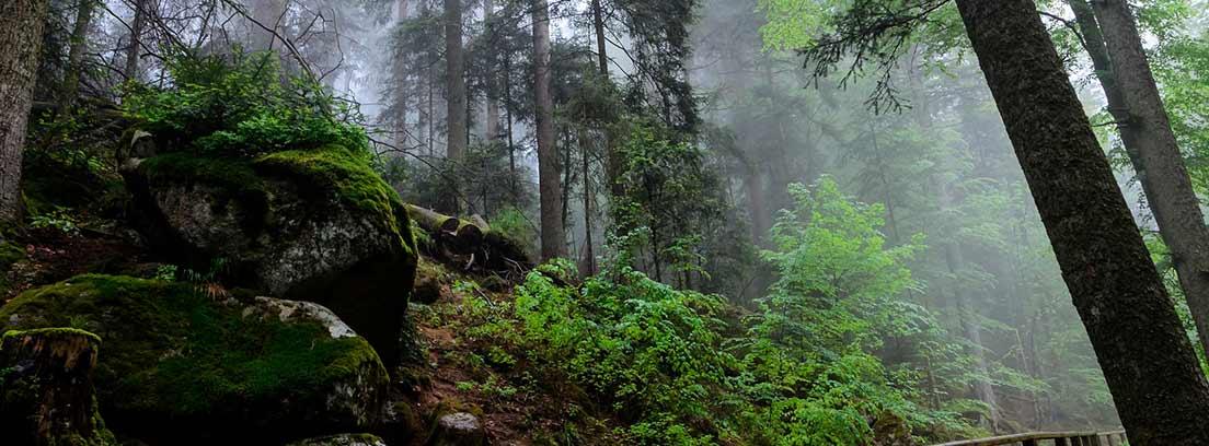 Naturaleza de la Selva Negra en Triberg